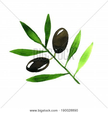 Olive Branch. Hand drawn watercolor isolated image