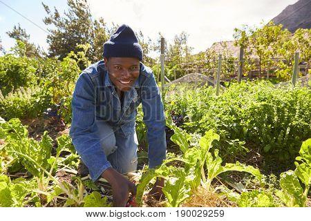 Portrait Of Gardener Working In Community Allotment