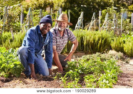 Portrait Of Two Men Working Together On Community Allotment