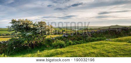 Summer On Bodmin Moor