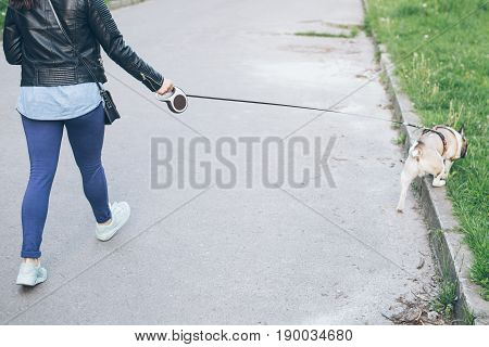 hand with leash lead french bulldog in city park