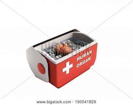 Organ Transportation Concept Open Human Organ Refrigerator Box Red 3D Render On White Background No