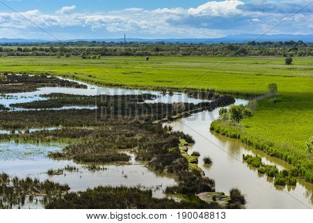 Landscape of Camargue with swamp during a sunny day