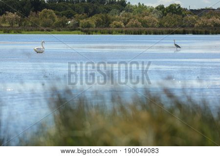 Various Birds In National Reserve Of Camargue