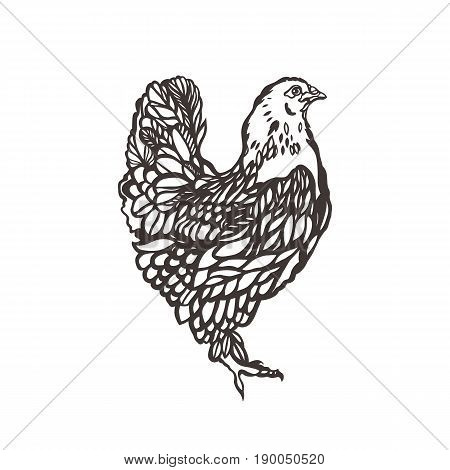 Chicken. Poultry. Bird painted with ink. Label for chicken products. Farming. Livestock raising. Hand drawn. Vector illustration.