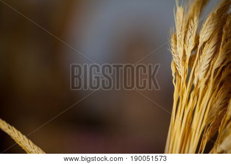 Close-up of ears of wheat in bakery shop at market