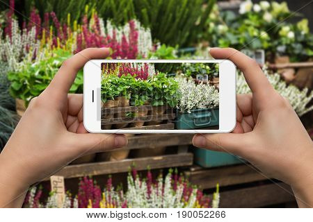 A woman photographs the bouquets of heather at a flower shop. Close-up of hands.