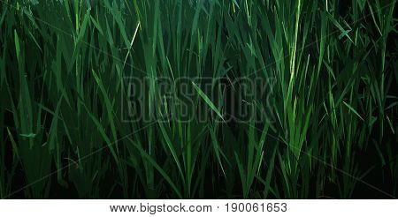 Abstract image of grass. Green grass. Green background. Rush, green rush, rush background. Natural background.