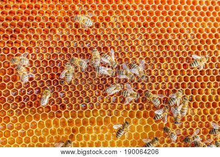 Bee Honeycombs Illustration .