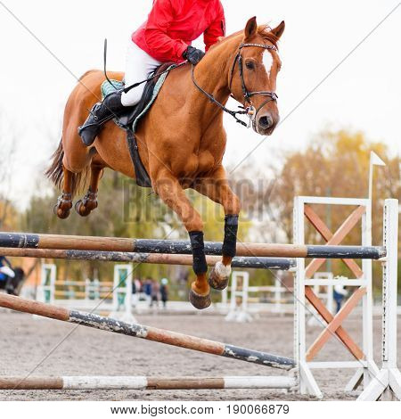 Sorrel horse with rider man jumping over obstacle on show jumping contest
