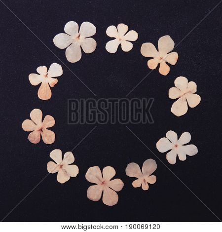 Pressed and dried flowers wreath isolated on white black background. For use in scrapbooking floristry or herbarium.