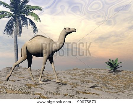 Camel walking upon a sand dune with palm trees by brown sunset - 3D render