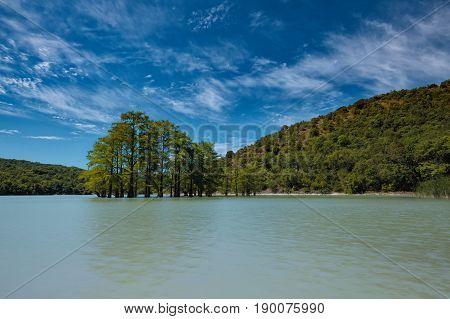 Swamp Cypress Grove In Water Of Sukko Lake