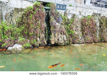 Gold Fishes Near Embankment Of Yi River In Longmen