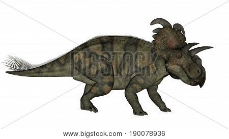 Albertaceratops dinosaur walking isolated in white background - 3D render