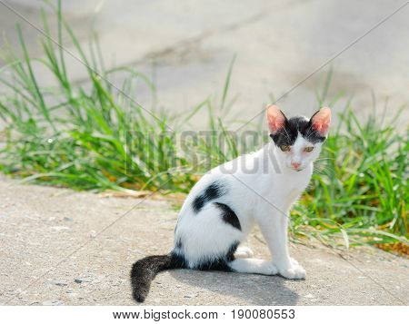 Cat staring at the camera. Animal portrait.