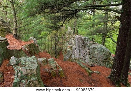 trail atop bluff at castle mound pine forest in black river state forest of wisconsin