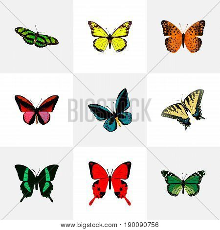 Realistic Archippus, Demophoon, Danaus Plexippus And Other Vector Elements. Set Of Beauty Realistic Symbols Also Includes Blue, Fly, Yellow Objects.