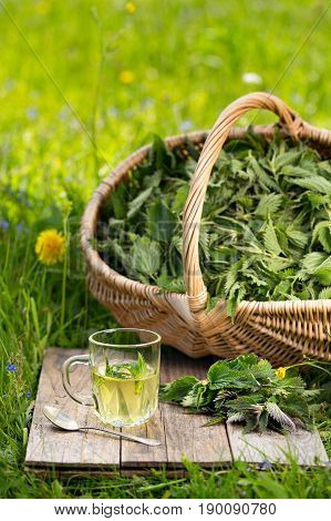 Fresh Spring Nettle. Suitable For Salad, Tea Or Use In Cosmetics