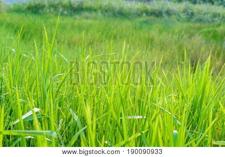 Green Meadow Line Pattern And Background