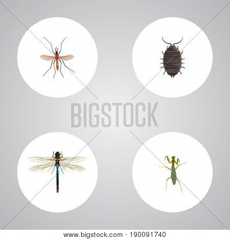 Realistic Damselfly, Grasshopper, Gnat And Other Vector Elements. Set Of Bug Realistic Symbols Also Includes Insect, Gnat, Locust Objects.