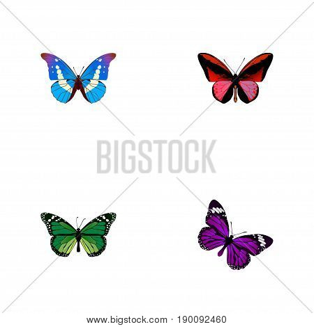 Realistic Callicore Cynosura, Bluewing, Butterfly And Other Vector Elements. Set Of Beauty Realistic Symbols Also Includes Purple, Malachite, Morpho Objects.
