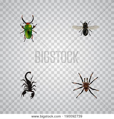 Realistic Insect, Midge, Poisonous And Other Vector Elements. Set Of  Realistic Symbols Also Includes Spider, Gnat, Poisonous Objects.