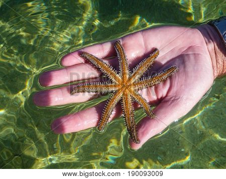 Open hand holding brown seastar with water background