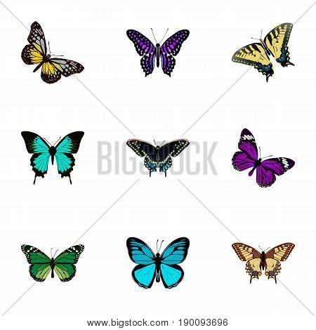 Realistic Butterfly, Tiger Swallowtail, Birdwing And Other Vector Elements. Set Of Moth Realistic Symbols Also Includes Butterfly, Moth, Beauty Objects.