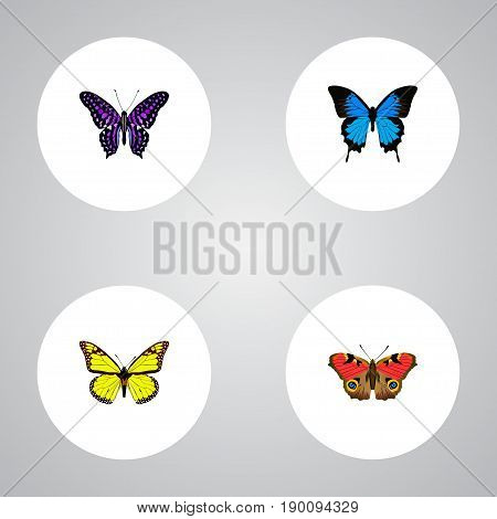 Realistic Archippus, American Painted Lady, Common Blue And Other Vector Elements. Set Of Beauty Realistic Symbols Also Includes Yellow, Violet, Cypris Objects.