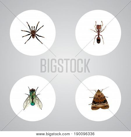 Realistic Butterfly, Emmet, Housefly And Other Vector Elements. Set Of Bug Realistic Symbols Also Includes Arachnid, Emmet, Moth Objects.