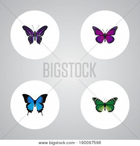 Realistic Polyommatus Icarus, Common Blue, Purple Monarch And Other Vector Elements. Set Of Butterfly Realistic Symbols Also Includes Blue, Green, Cypris Objects.