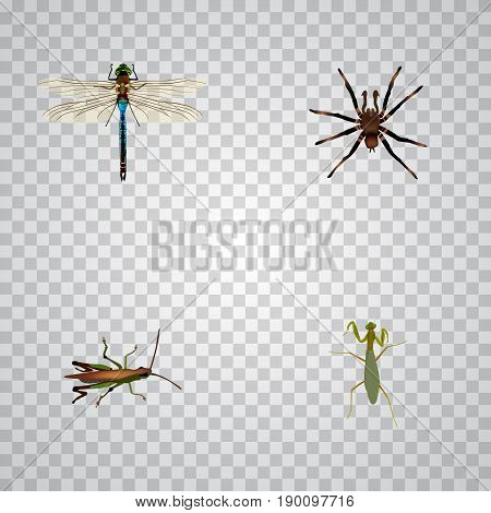 Realistic Damselfly, Grasshopper, Locust And Other Vector Elements. Set Of Bug Realistic Symbols Also Includes Dragonfly, Mantis, Tarantula Objects.