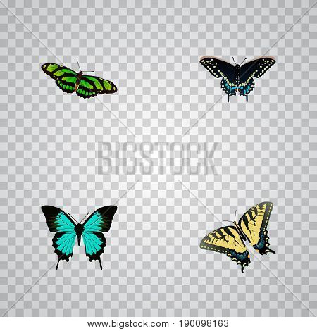Realistic Checkerspot, Copper, Morpho Hecuba And Other Vector Elements. Set Of Butterfly Realistic Symbols Also Includes Bluewing, Tiger, Hairstreak Objects.