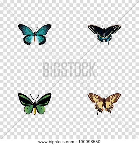 Realistic Tiger Swallowtail, Tropical Moth, Pipevine And Other Vector Elements. Set Of Moth Realistic Symbols Also Includes Fly, Moth, Swallowtail Objects.