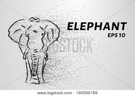 The Elephant Of The Particle. The Elephant Consists Of Circles And Points. Vector Illustration.