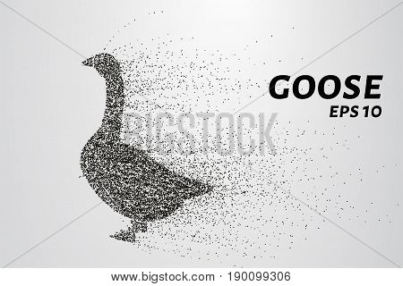 Goose Of The Particles. Goose Consists Of Circles And Points. Vector Illustration.