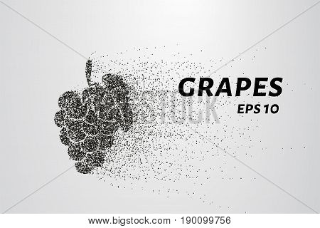 The Grapes Of Particles. Grapes Consists Of Small Circles And Dots. Vector Illustration
