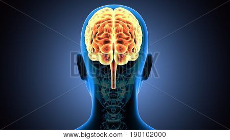 3d illustration human body brain of a human body part