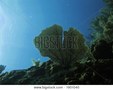 view of sunlight sponge fan on coral poster