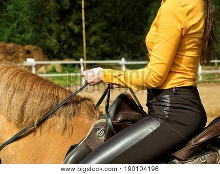 Young cheerful girl rides on a brown horse. Riding training. Horseback Riding. Saddle close-up.