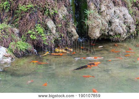 Gold Fishes In Yi River In Longmen Grottoes