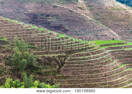 Hill With Terraced Paddy In Dazhai Village