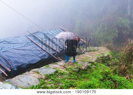 Peasant Walk On Wet Pathway Over Hut