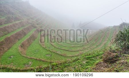 Mist Over Rice Terraced Gardens