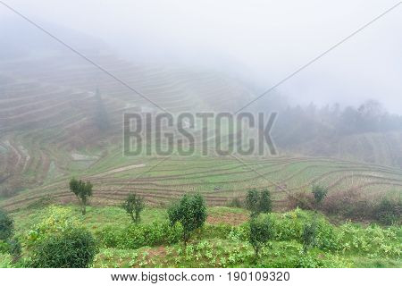 View Of Rice Terraced Fields In Fog