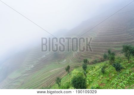 View Of Rice Terraced Fields In Mist