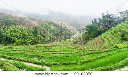 Terraced Rice Fields And Tiantouzhai Village