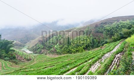 View Of Wet Terraced Rice Beds From Tiantouzhai