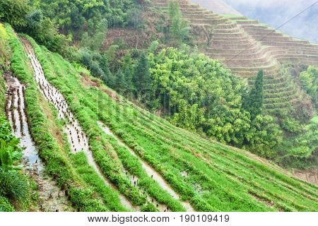 Above View Of Rice Beds On Terraced Hills